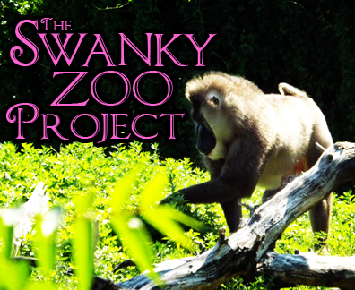 The Swanky Zoo Project